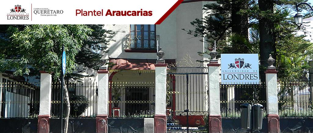 araucarias-2