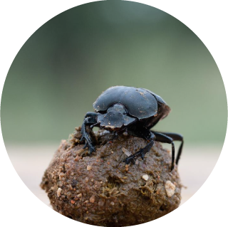 icono-entomo